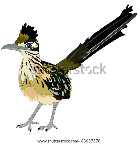 greater roadrunner bird - stock vector