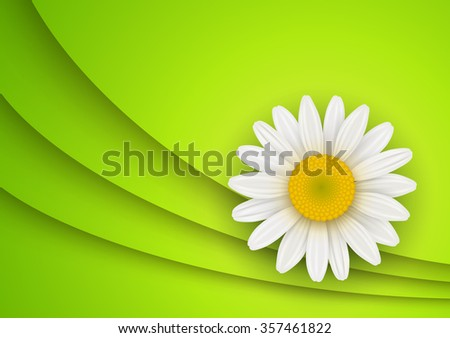 Green Background with white chamomile flower, vector illustration - stock vector