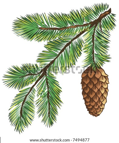 Green branch of pine-tree on white background - stock vector