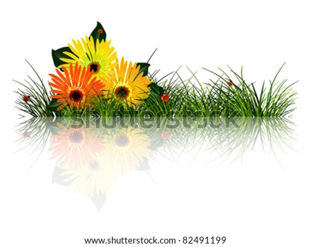 green grass and ladybugs reflected - stock vector