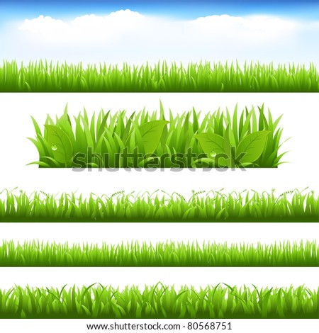 Green Grass And Leafs Set, Isolated On White Background, Vector Illustration - stock vector