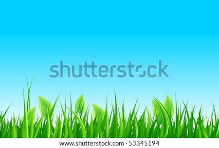 Green grass and sky - stock vector
