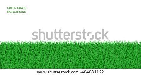 Green grass field background. - stock vector