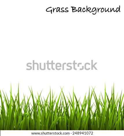 Green grass lawn isolated on white. Floral nature spring background - stock vector