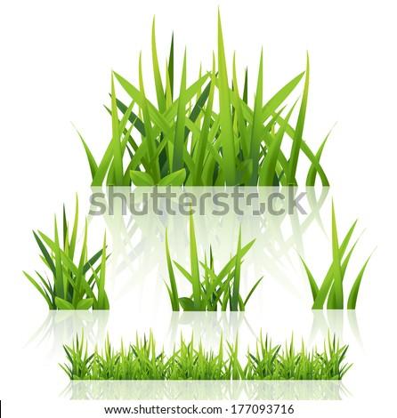 Green grass nature, vector  - stock vector