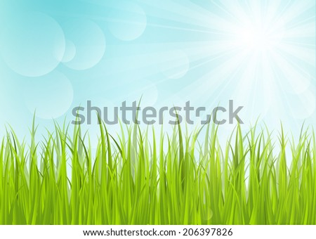 Green grass on sunny background - stock vector
