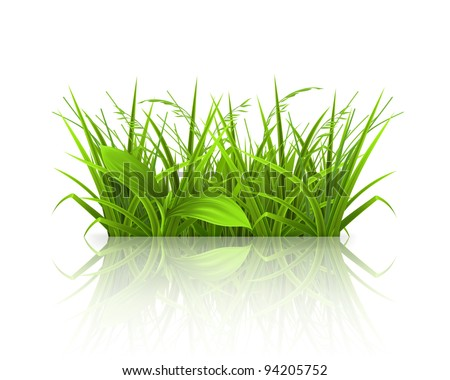Green grass, vector - stock vector