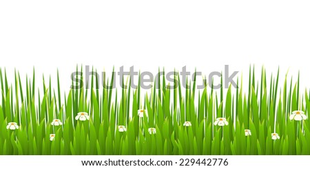 Green grass with blooming chamomiles isolated on white background. Nature. Spring. Vector illustration. - stock vector