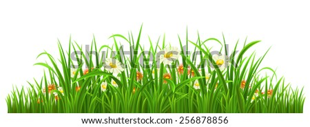 Green grass with flowers on white, vector illustration - stock vector