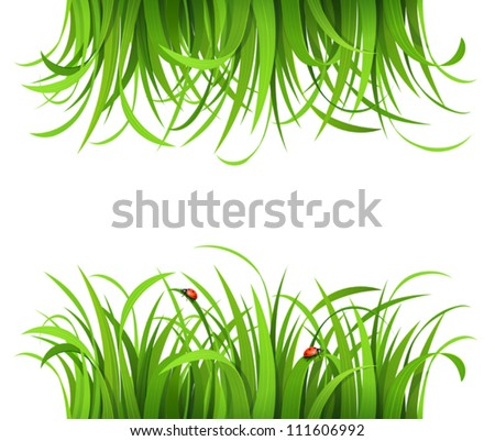 Green grass with ladybirds isolated on white - stock vector