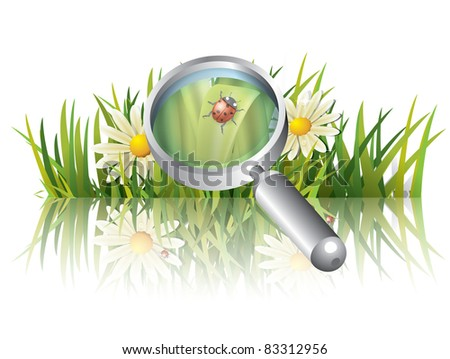 Green grass with ladybug - stock vector