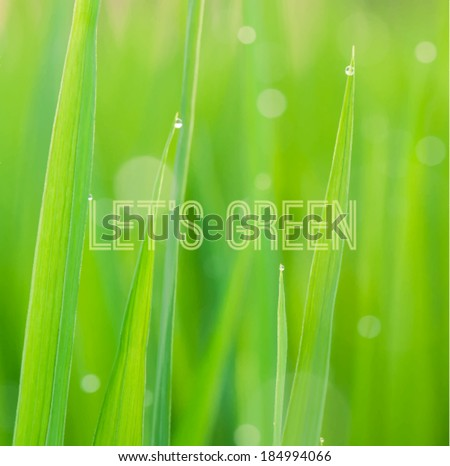 Green grass with small water drops texture, vector illustration - stock vector