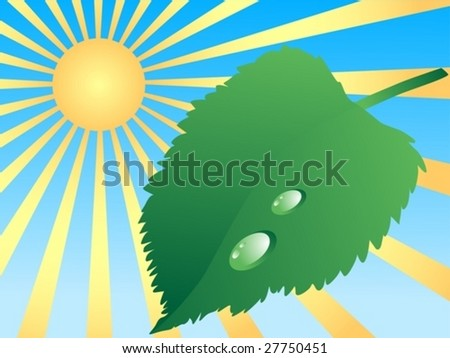 green leaf and sun
