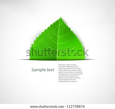 Green leaf background, eps10 Ecology vector label. - stock vector