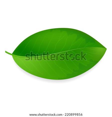 Green leaf ecology emblem isolated vector illustration - stock vector
