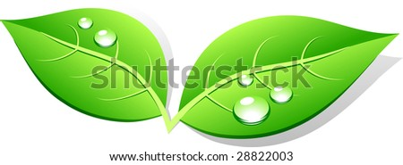 Green leaf icon. Vector illustration. - stock vector