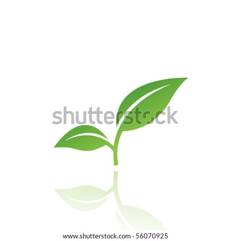 Green leaf isolated on white - stock vector