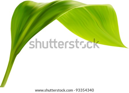 green leaf on white background, vector format - stock vector