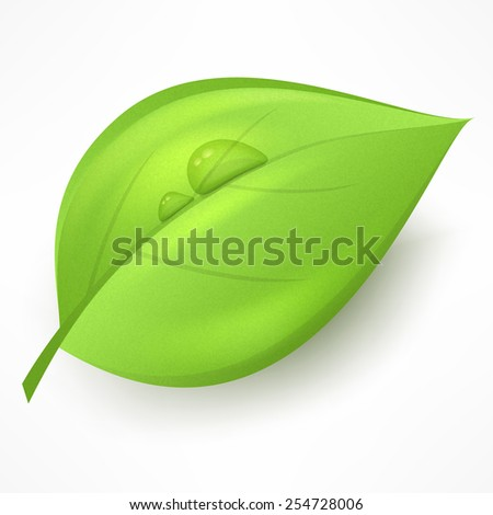 Green leaf with drop water isolated on white, vector illustration. - stock vector