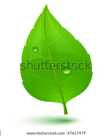 Green leaf with drops of water. Eco Concept. Vector illustration. - stock vector