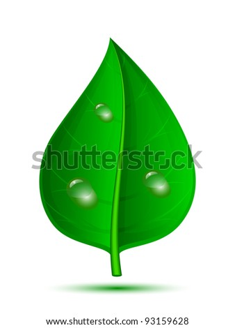 Green leaf with drops of water isolated on a white background. Vector illustration - stock vector