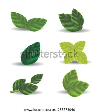 Green leaves - stock vector