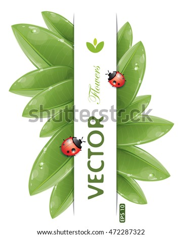 Green leaves design with ladybug, isolated on white, vector illustration, eps-10