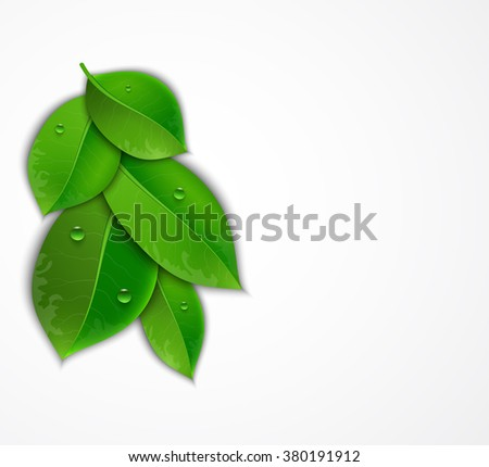 green leaves on a white background, Vector illustration of ecology concept.  Eco Concept with glossy fresh green leaves  with drops of water - stock vector