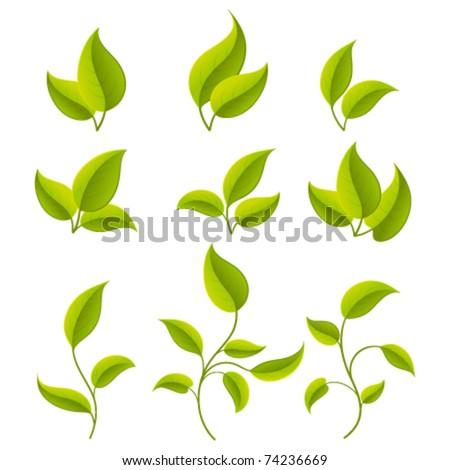 Green leaves set. Vector illustration Eps 10. - stock vector