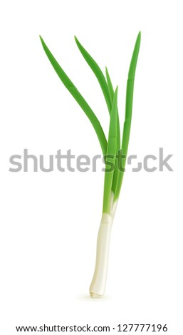 Green onion, vector