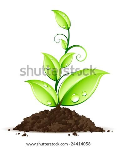Green plant - stock vector