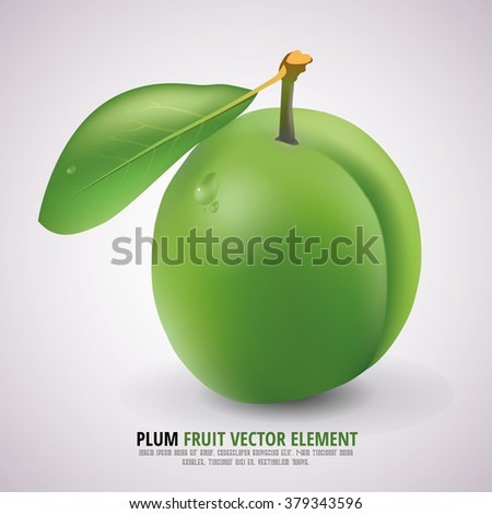 Green Plum with Stem, Green Leaf and Shadow on the white Background - Isolated Realistic Vector Illustration - Nature Fruit Element Design - stock vector