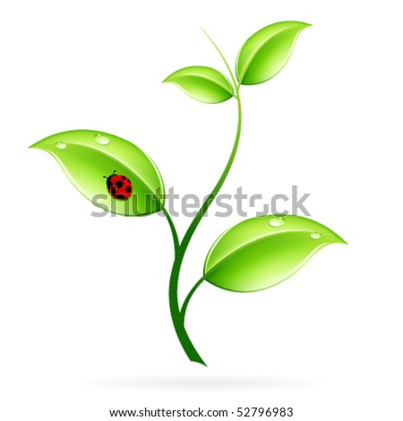 Green sprout with leaves and ladybird isolated on white - stock vector
