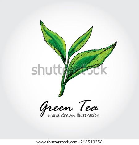 green tea background. - stock vector