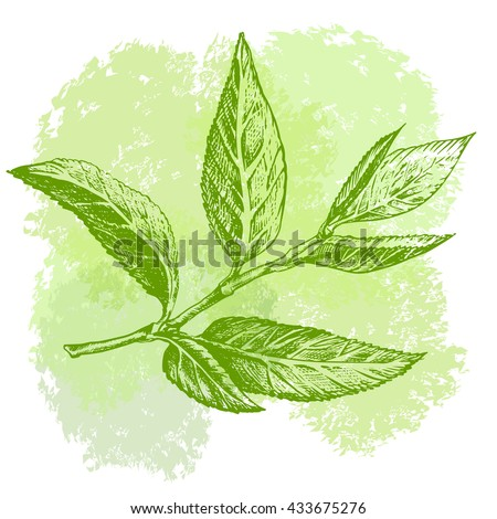how to get green tea