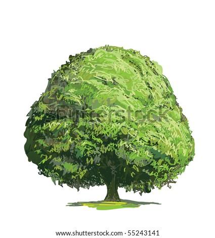 Green tree - stock vector