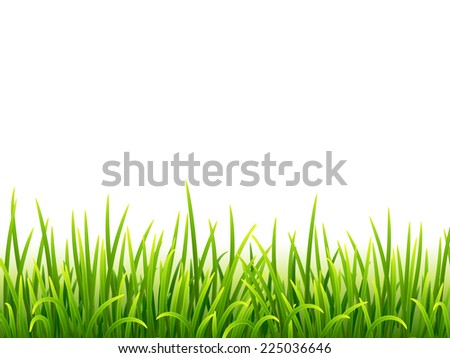 Green vector isolated grass on white background - stock vector