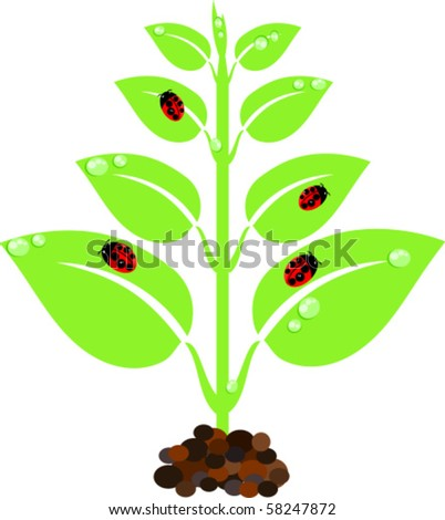 Green young new plant with droplets and ladybugs - stock vector
