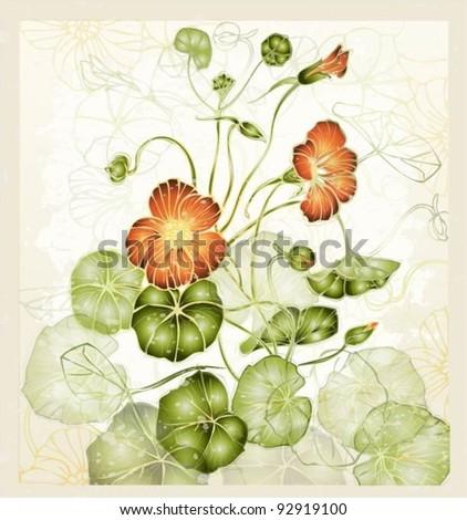 Greeting card with nasturtium. Illustration nasturtium. - stock vector
