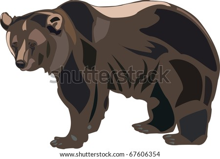 Grizzly bears are the largest predators of American - stock vector