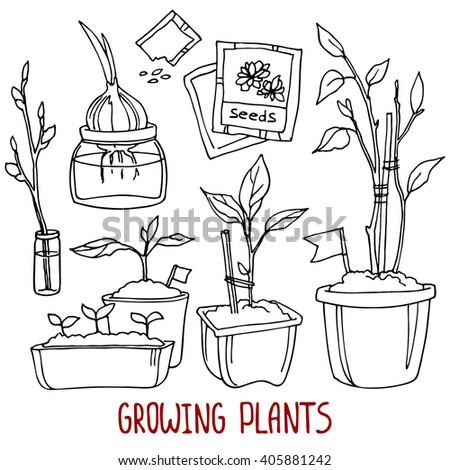 Growing plants: plants, sprouts, seeds, pots and twigs. Hand-drawn design elements. - stock vector