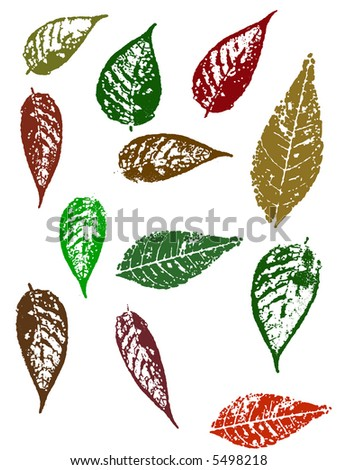 Grunge elements - Autumn Leaves 4.   Highly Detailed vector grunge elements - stock vector