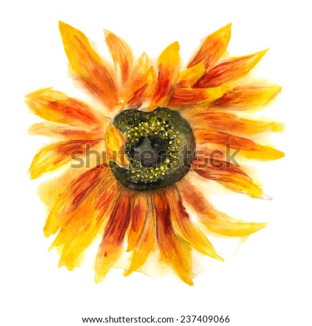 Grunge watercolor image of flower of sunflower on white background. Vector eps8 - stock vector