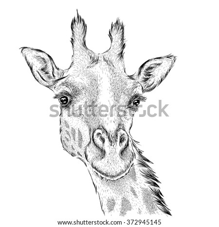 how to draw a giraffe face easy