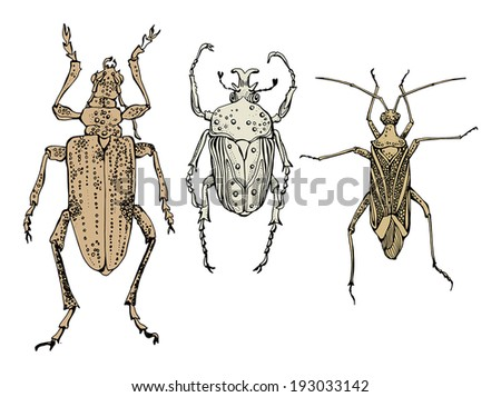 Hand draw insects, vector illustration