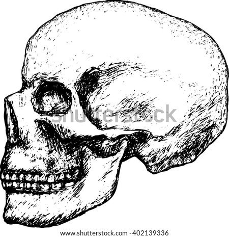 Hand draw sketch of the human skull. Vector image. - stock vector