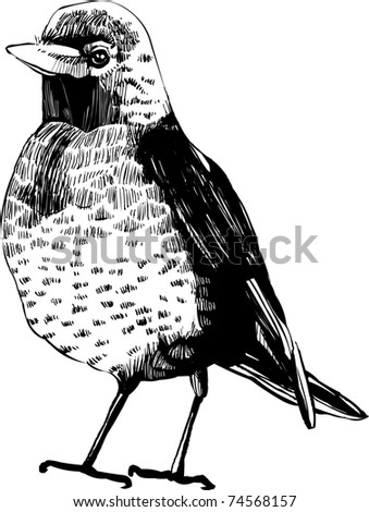hand-draw vector bird -  vintage bird illustrations - stock vector