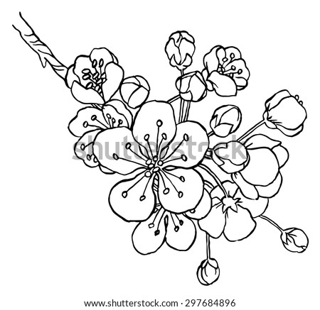 Hand drawing apple tree branch in blossom line art isolated on a white  - vector illustration - stock vector