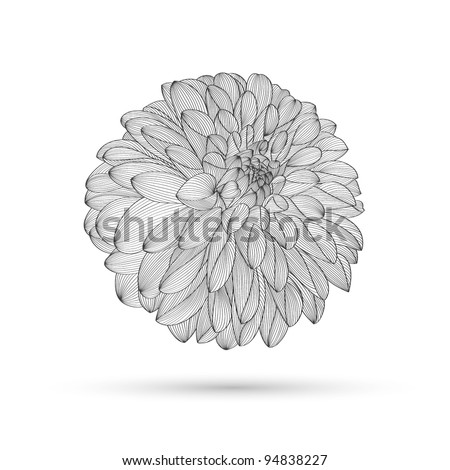 Hand-drawing floral background. Vector flower dahlia. Element for design. - stock vector
