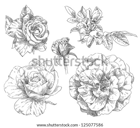 Hand drawing flower blossom - stock vector